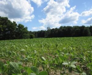 Norfolk County Farm